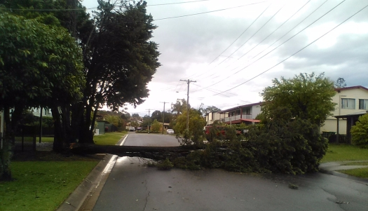 Tree across road